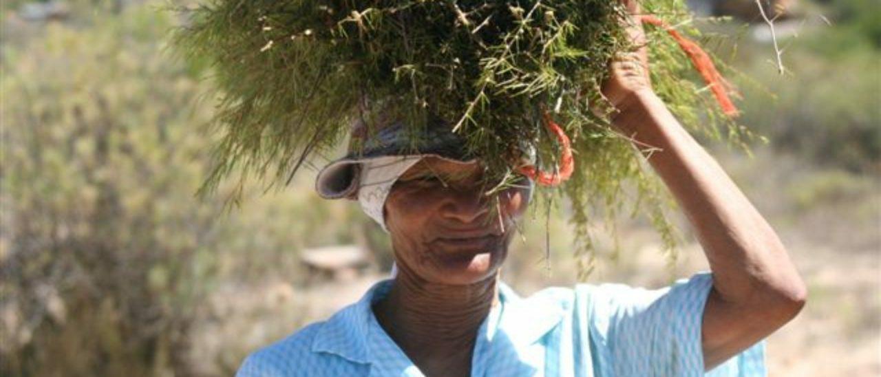 produttori di tea e infusi
