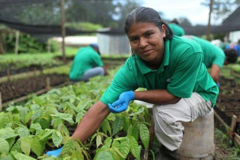 associazioni di produttori di cacao
