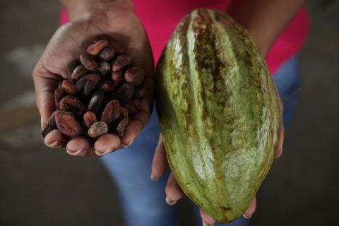 Produttori di cacao