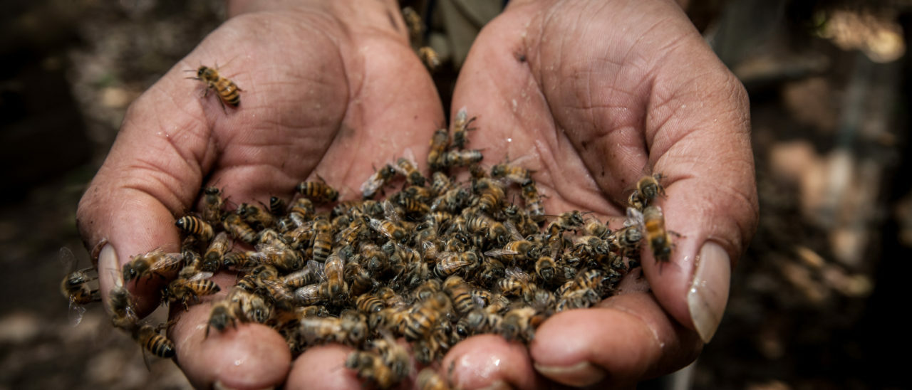 Antonio Gilberto Paz de los Santos, apicoltura fairtrade