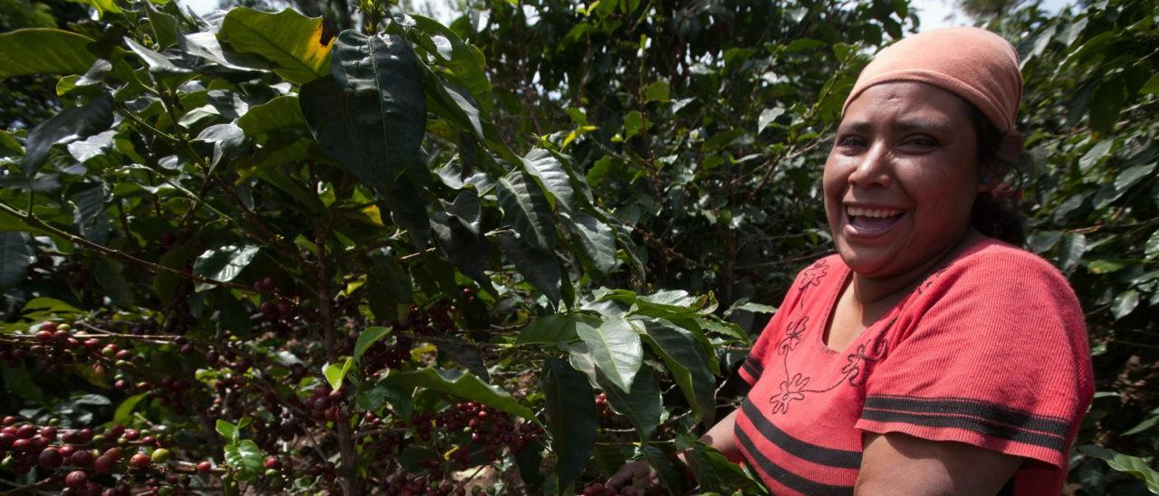 Fedecocagua, produttore certificato del Guatemala