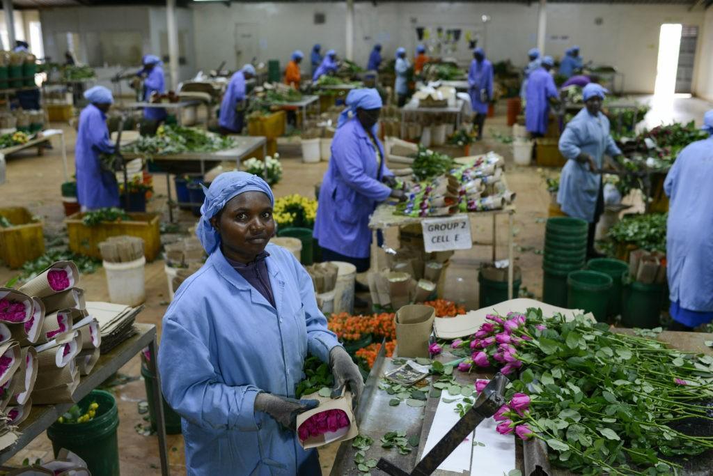 Rose fairtrade dal Kenia