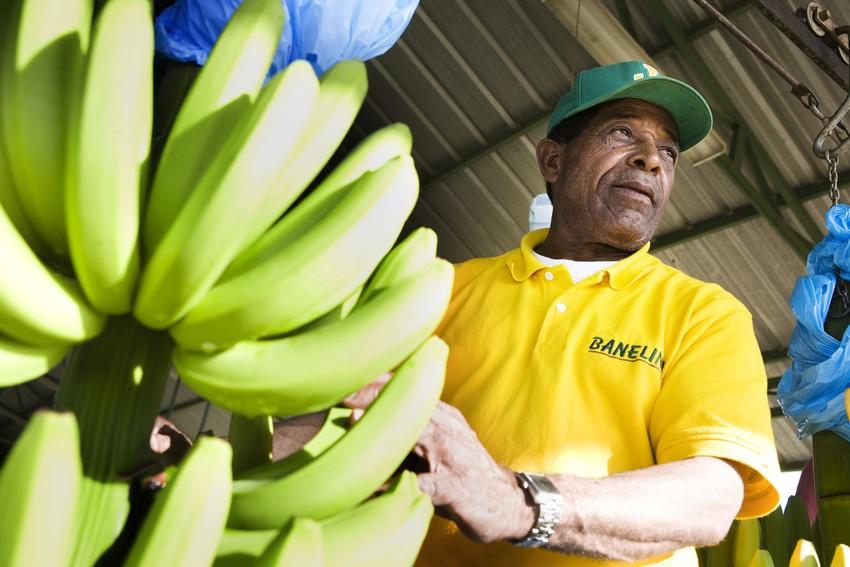 Produttore di Banelino, Repubblica Dominicana