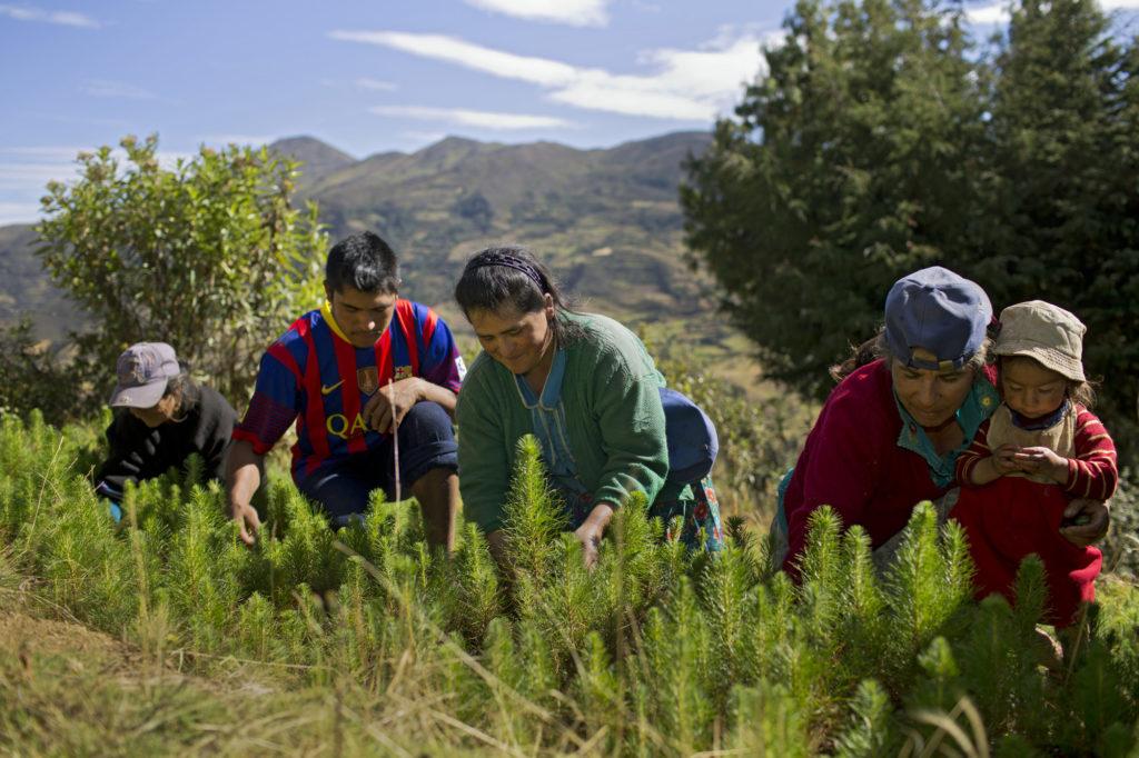 Alcuni soci di Norandino lavorano al vivaio che serve alla riforestazione dell'area. © Danielle Villasana