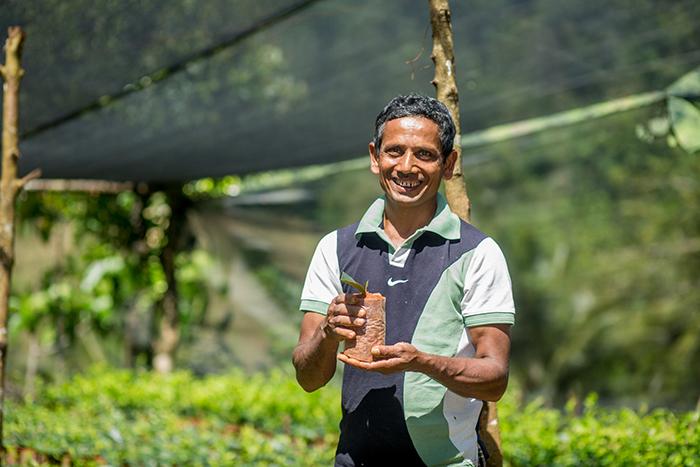Produttore di tè biologico