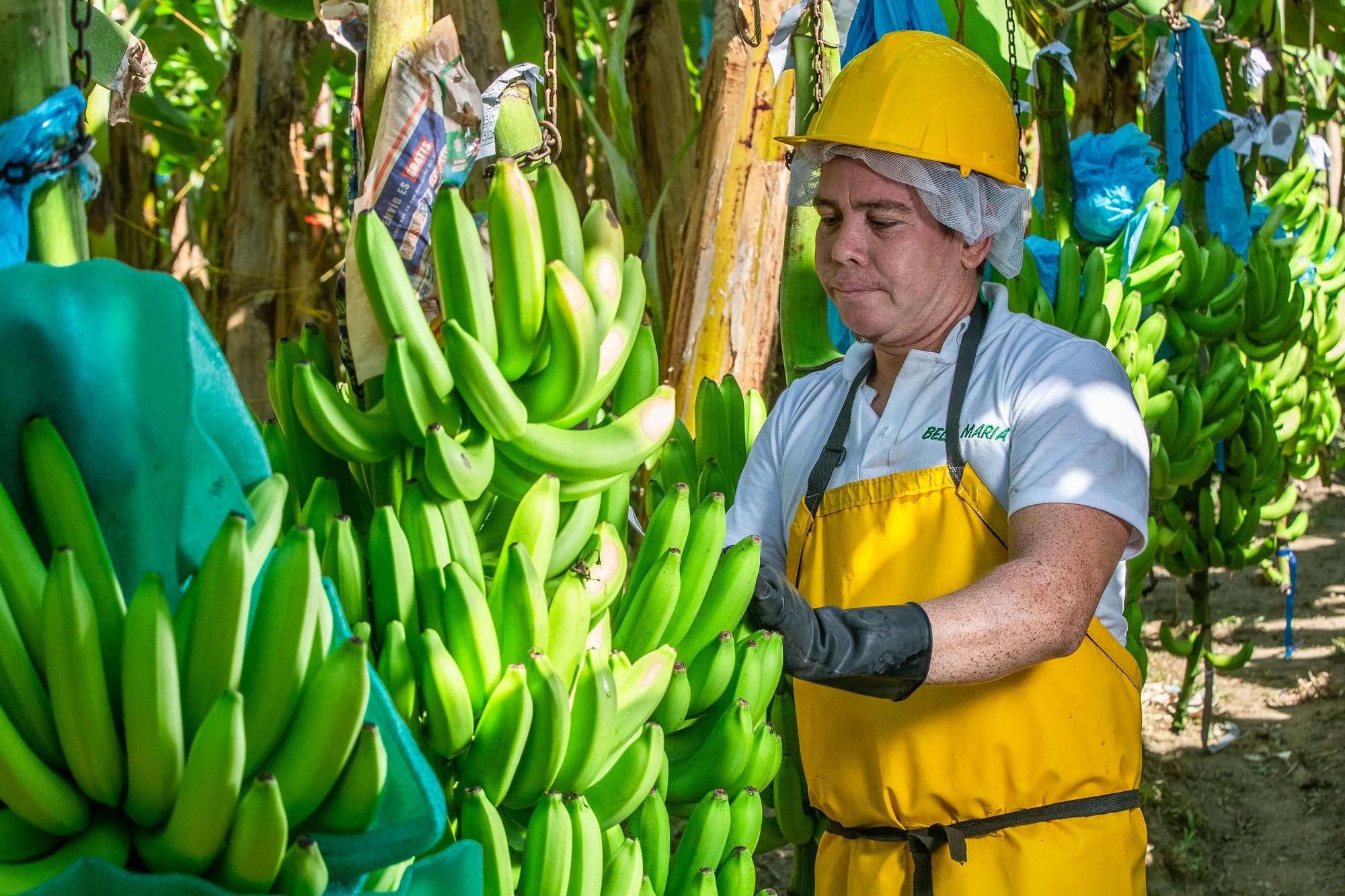 Lavoratore in una piantagione