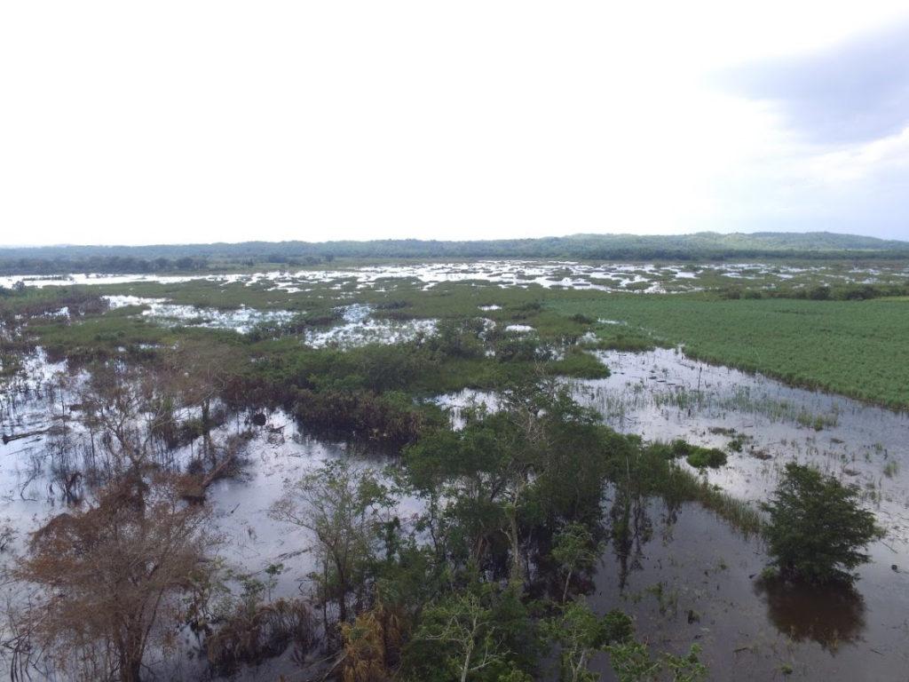 I campi di canna da zucchero allagati a causa delle recente alluvione