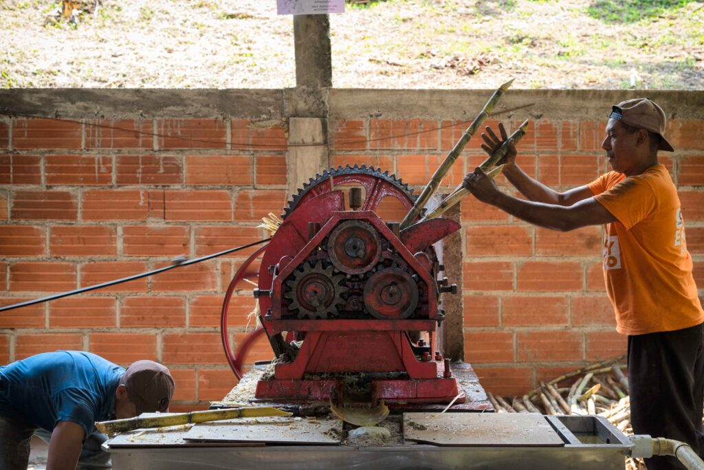 Spremitura della canna presso uno dei centri di lavorazione di Asopanela