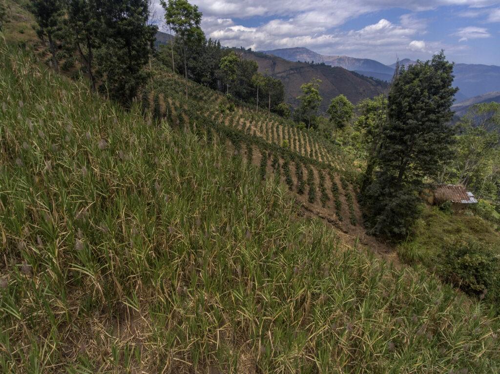 Programma di diversificazione colturale a Norandino, Piura, Perù.