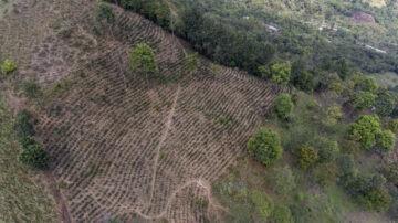 Montero, Piura, Peru. Progetto di riforestazione presso la cooperativa Norandino. ©Eduardo Martino