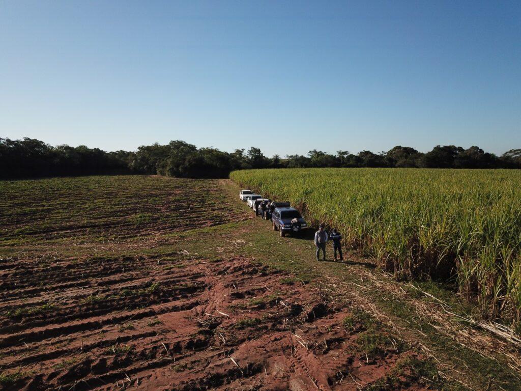 Foto di un campo di canna da zucchero dal drone