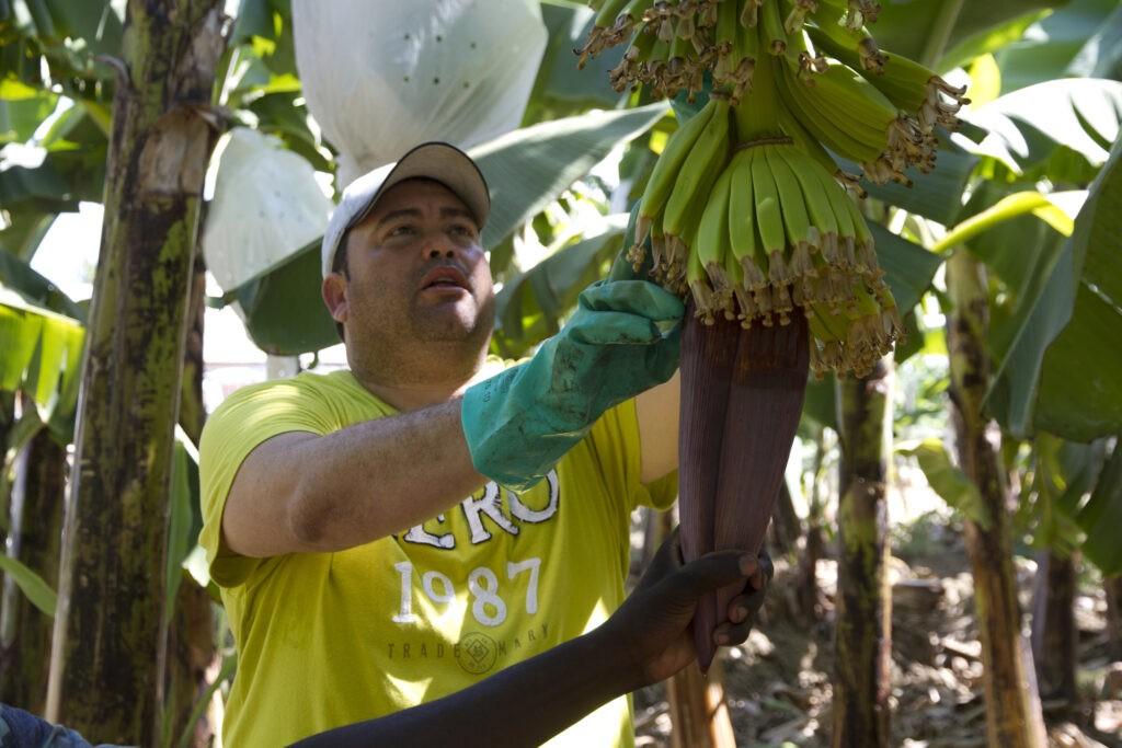 Carlos Pascal di Asobacas (Repubblica Dominicana). Il Premio Fairtrade ha aiutato la cooperativa a ottenere la certificazione del biologico.