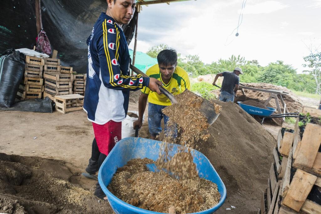 Il compost è un ingrediente fondamentale nella coltivazione di cacao biologico ad Acopagro (Perù).