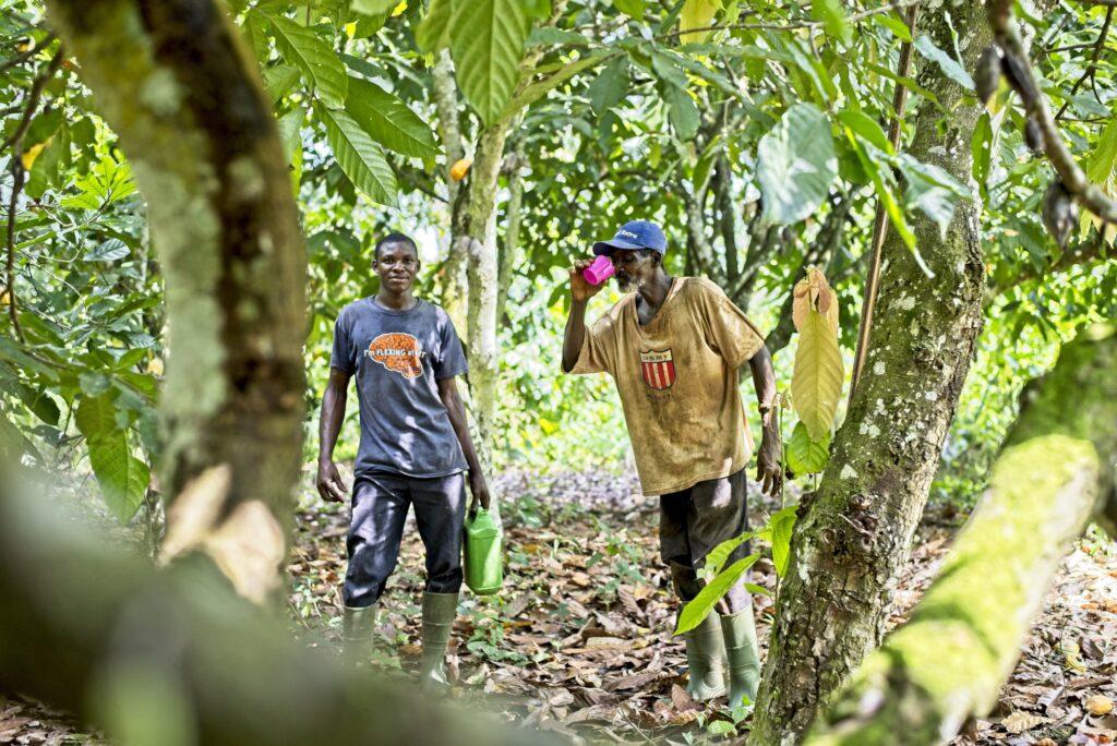 Due uomini fanno un apausa mentre raccolgono il cacao, Costa d'Avorio