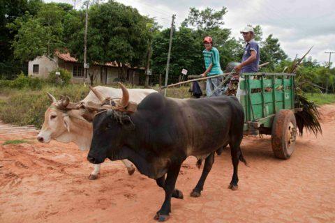 Cooperativa Manduvirà - carro trainato da buoi