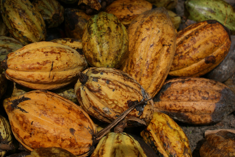 Cacao Fairtrade