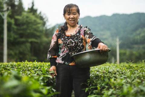 tea biologico fairtrade
