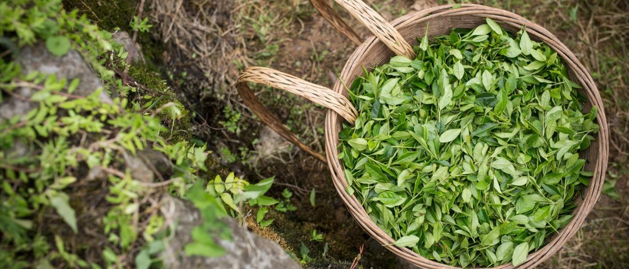 tea fairtrade