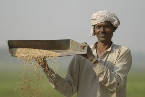 Produttori di riso e cereali fairtrade