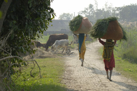 Sunstar, fairtrade coop riso