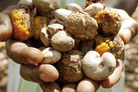 produttori fairtrade di frutta secca