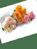 rose recise